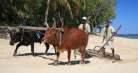Cout de la vie à Madagascar
